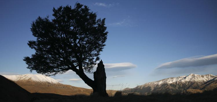 romer_trees_7.jpg