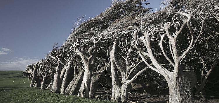 romer_trees_4.jpg