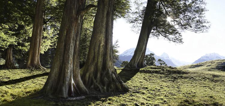romer_trees_2.jpg
