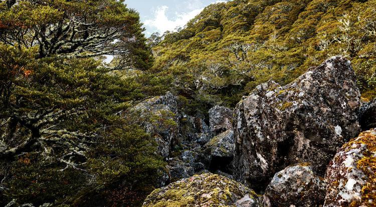 romer_landscape_2.jpg