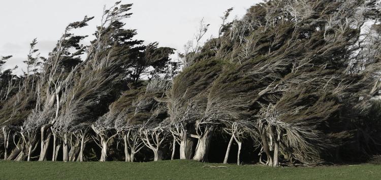 romer_trees_5.jpg