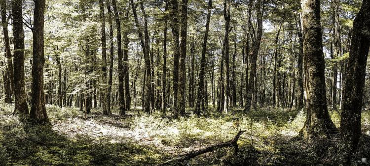 romer_landscape_15.jpg