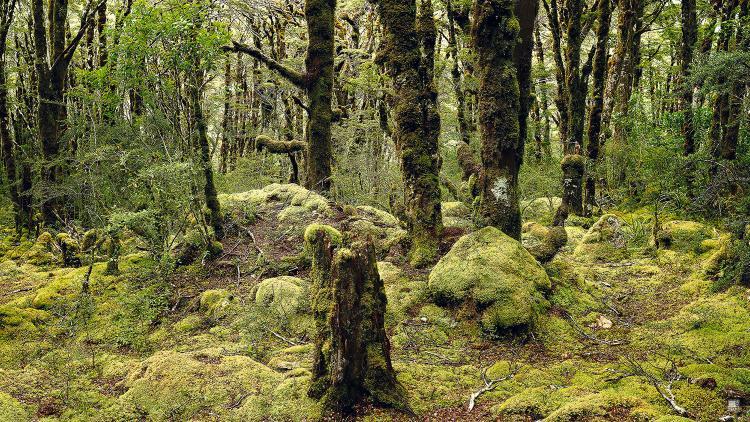 romer_landscape_10.jpg
