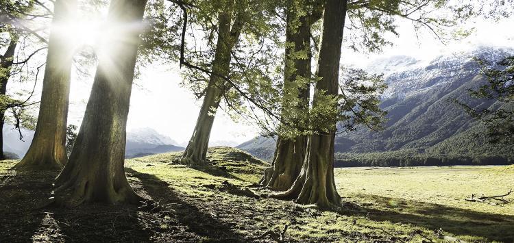 romer_trees_3.jpg